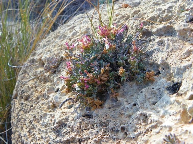 morfologia y flora