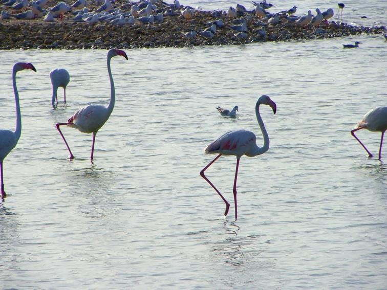 aves en balsa