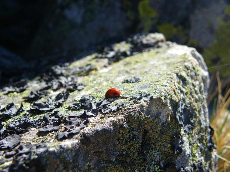 mariquita en roca en el monte abantos
