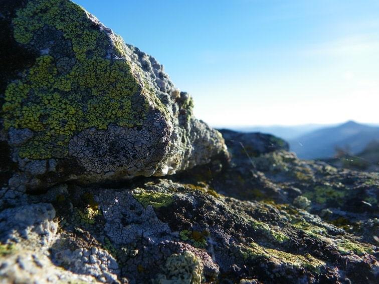 telarañas en rocas y líquenes