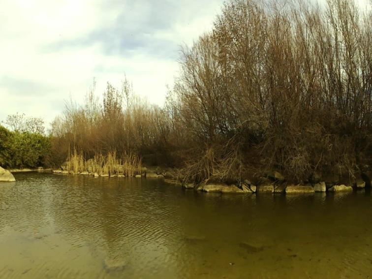 imagen de un lago en un paque publico sin filtro