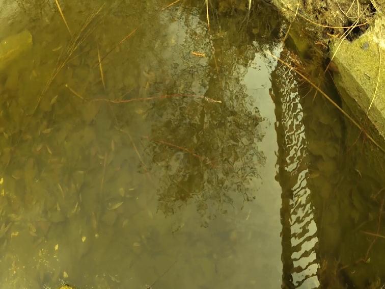imagen de los reflejos en un lago con filtro