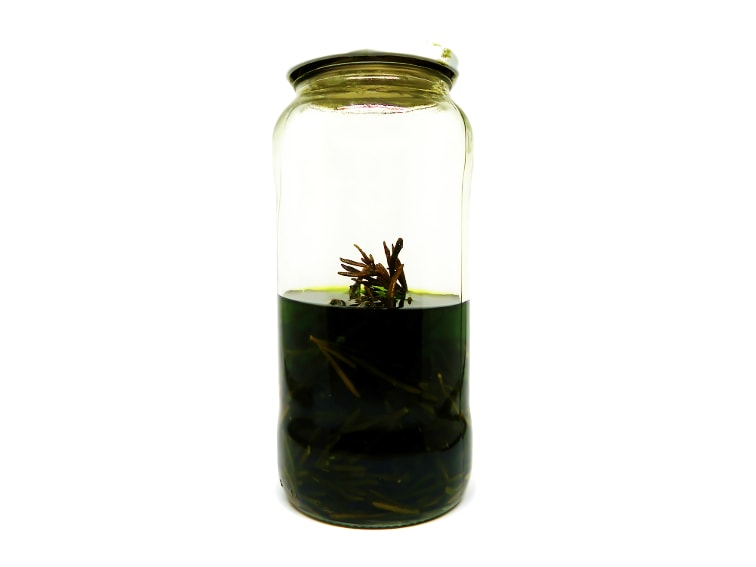 tarro de cristal con alcohol de 96 grados y ramas de romero fresco