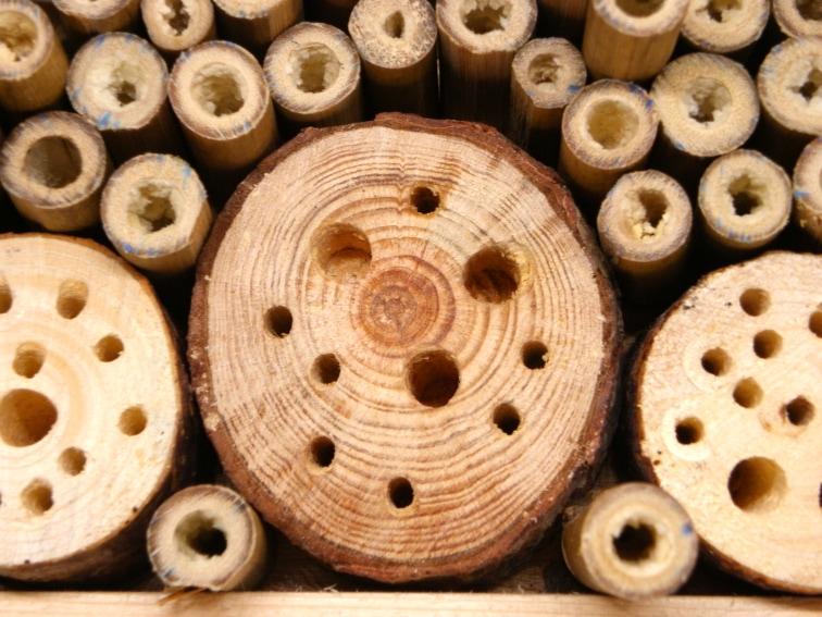 tocones de madera con perforaciones y cañas de bambu para hotel de insectos
