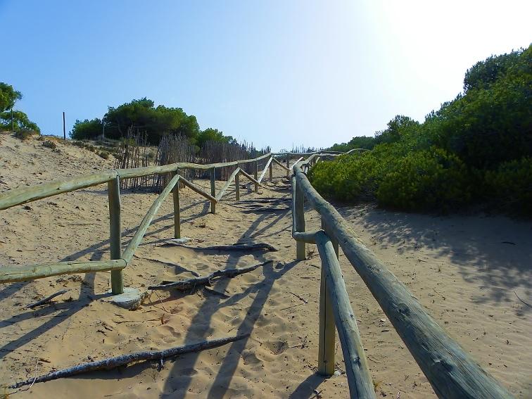 continuacion del sendero entre dunas por el parque natural de las salinas de santa pola