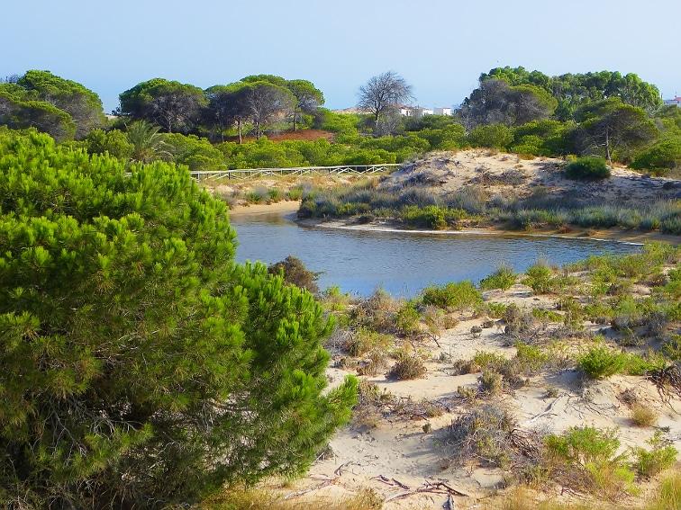 pequeño lago entre pinadas en el parque natural de las salinas de santa pola