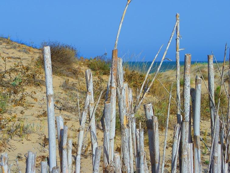 valla de juncos para prevenir la erosion en las dunas del parque natural de las salinas de santa pola
