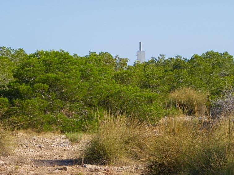 zona de pinada de porte medio y vertice geodesico situado en la sierra y cabo de santa pola