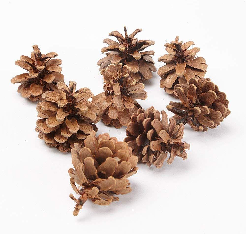 piñas naturales para decoración navideña 50 Unidades