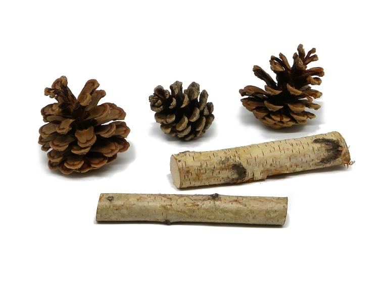 piñas abiertas y ramas de abedul para hacer centro de mesa aromatico