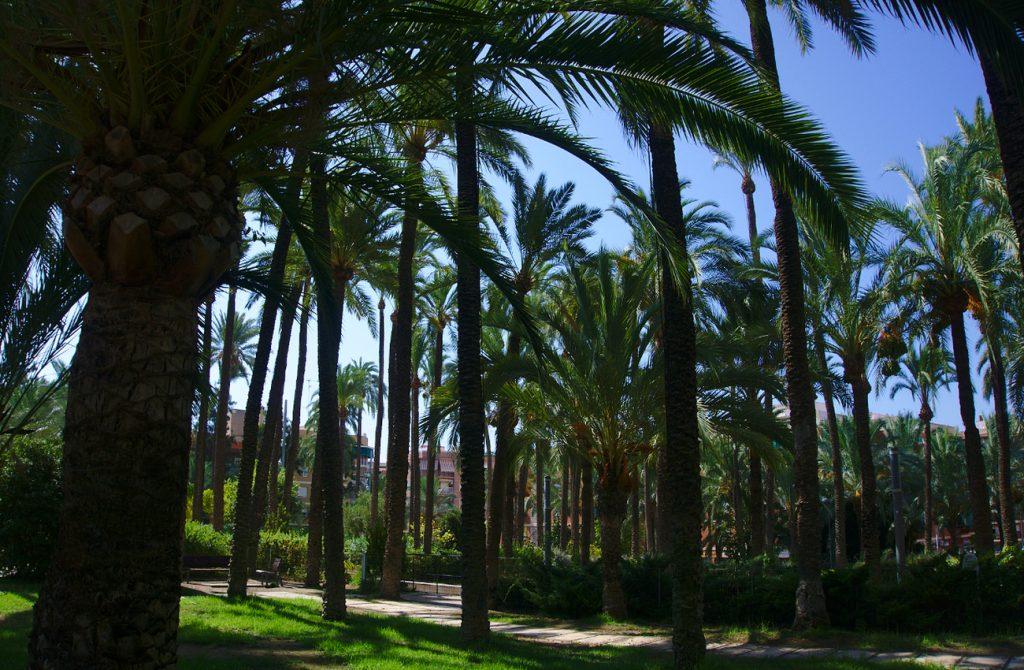 parque de el palmeral en el pueblo de santa pola