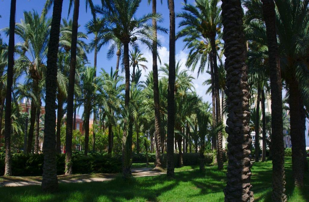 parque de el palmeral en santa pola