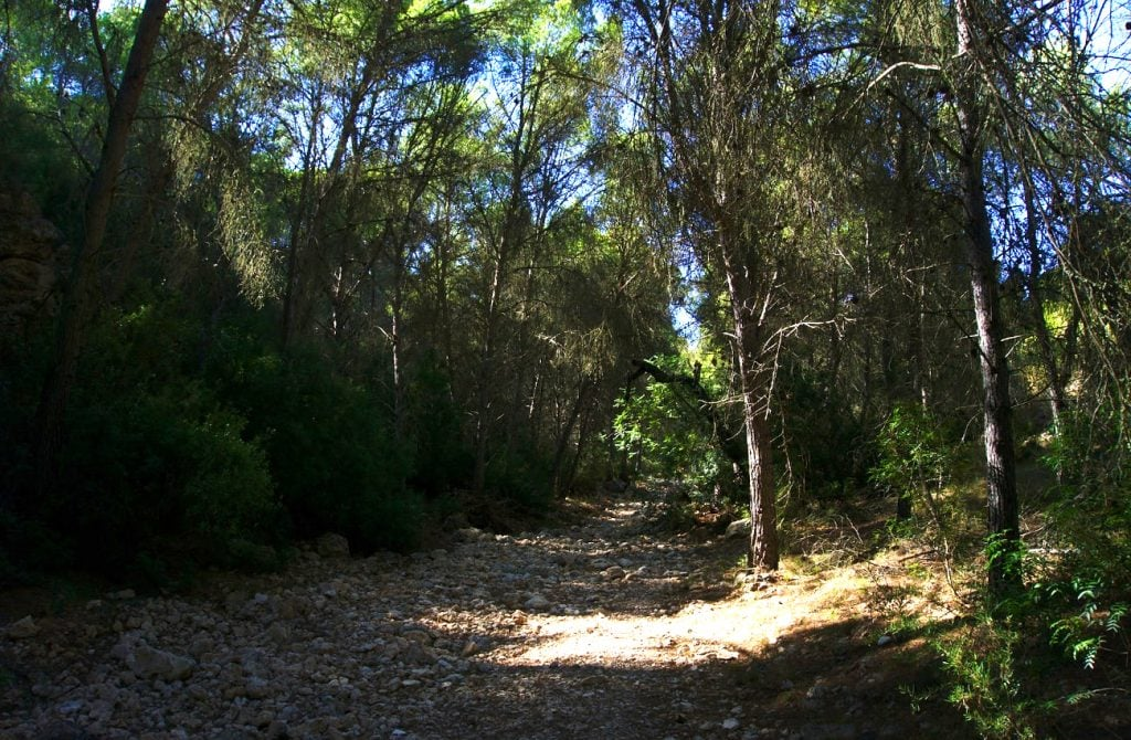 camino entre pinada frondosa en el barranco de paco mañaco santa pola
