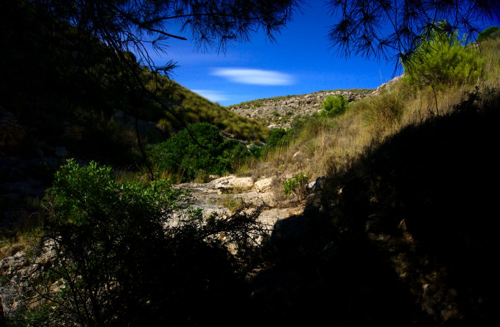 debajo de un pino en el interior del barranco en la sierra de santa pola