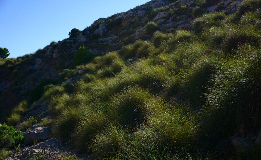 ladera del barranco repleta de vegetacion en la sierra de santa pola