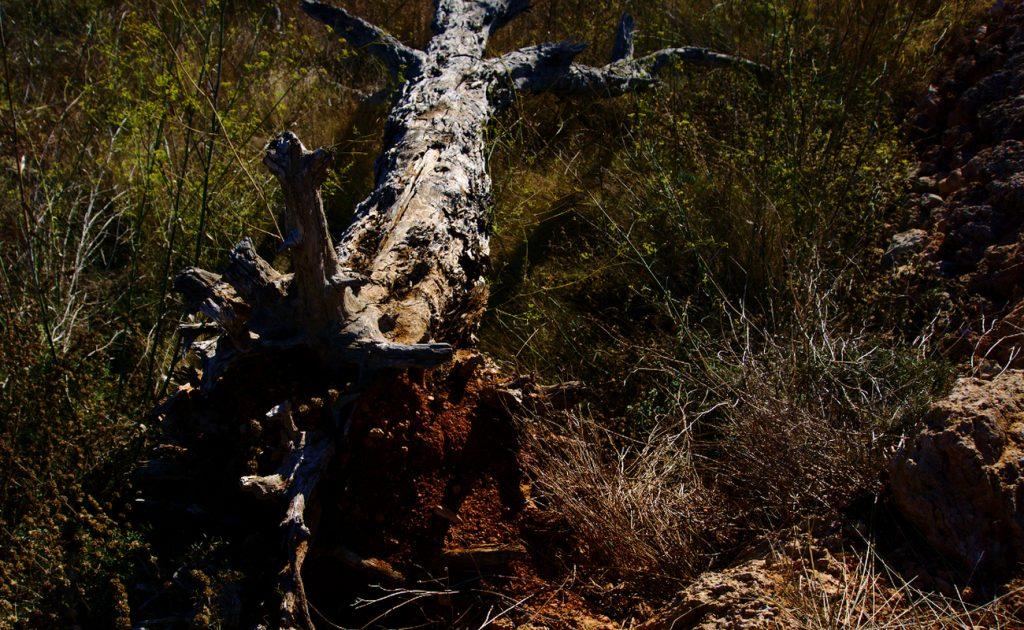 tronco seco y tierra roja en el paraje de la fulla roja en la sierra de santa pola_01