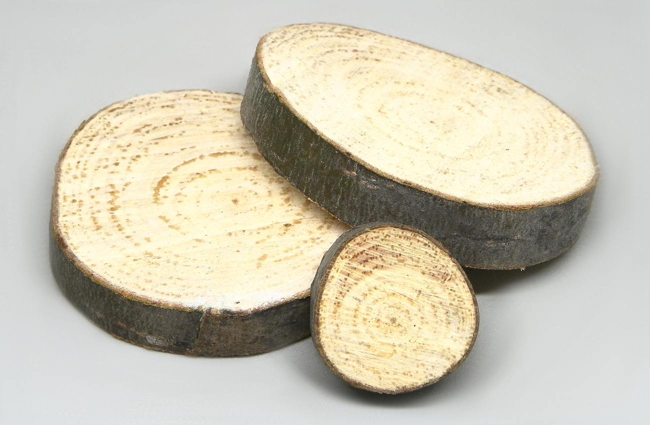 rodajas de madera de pino